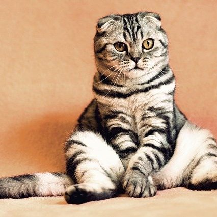 Insurance For Pet Stores | Cat