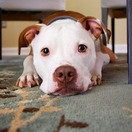 Insurance For Pet Stores | Dog